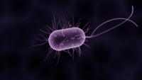 bacteria-1832824_960_720