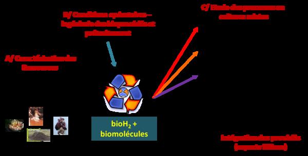 bioh2