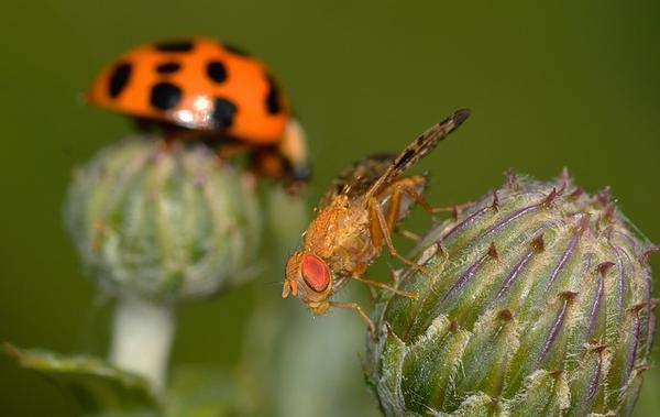 insects-790698_640