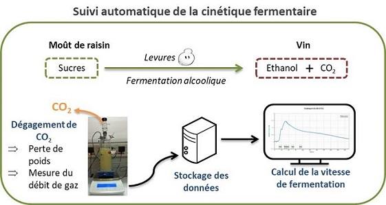 shema fermentation-reduit2